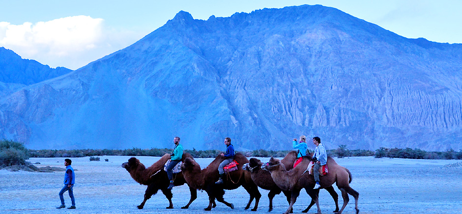 Camel Safari in Nubra Valley, Leh Ladakh