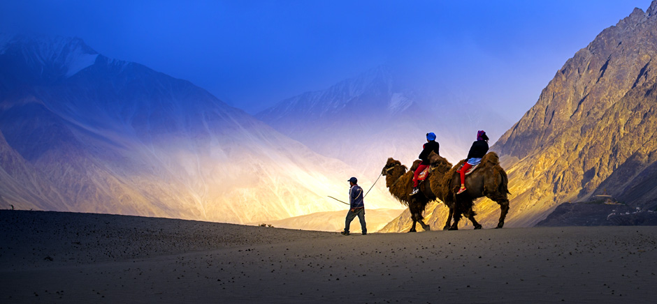Camel Safari in Nubra Valley, Leh Ladakh